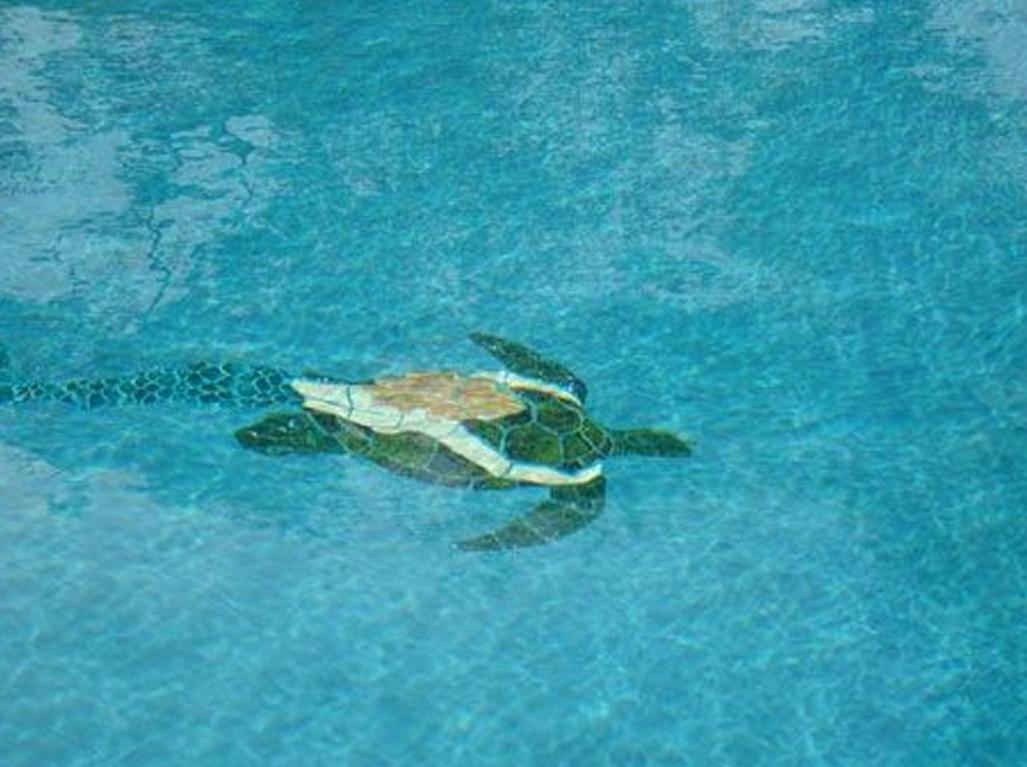 Spakle Quartz Cayman Pool with TIle Feature